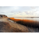 Autumn Beauty.