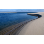 Shark Waters