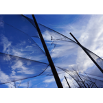 Blowing, Catching