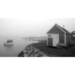 Fog in the Harbor.