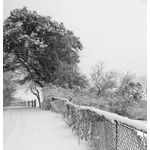 Dressed in White.