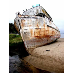 The Old Girl.